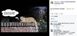 台大僑生掐死「大橘子」1.7萬人連署要他退學!