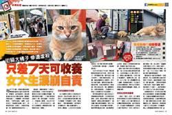 《時報周刊》街貓大橘子慘遭虐殺 只差7天可收養 女大生淚崩自責