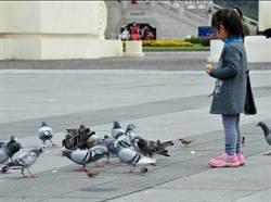 國內首例  北市野鴿驗出禽流感