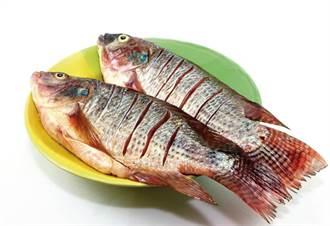 含DHA及蝦紅素 吃台灣鯛護腦抗氧化