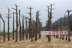 鐵砧山雜亂木棉園整修 將重現「一度讚」風姿
