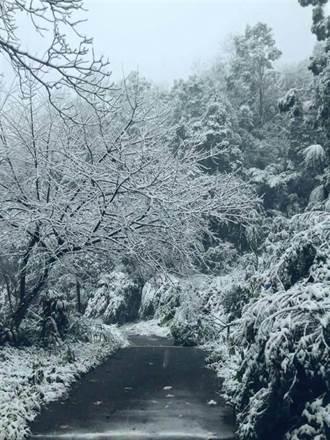 觀音山、白雞山深夜飄雪 民眾歡呼