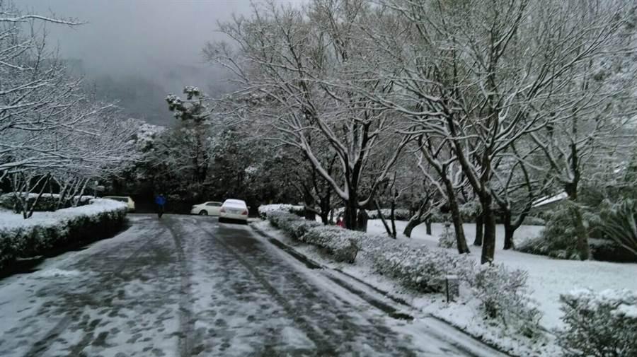 陽明山一夜大雪,成了銀色世界。(保七總隊提供)