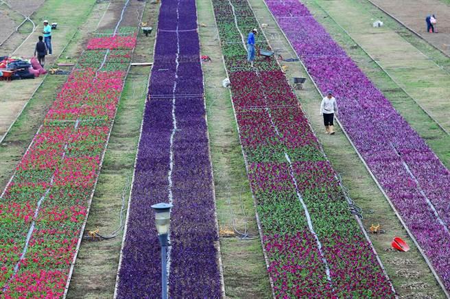 農曆春節將至,文化局請工人在原本草坪枕木鐵軌之間空地種植各種花卉,希望在春節年假時獻給市民耳目一新的花海景觀。(王錦河攝)