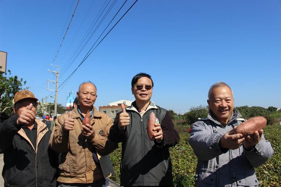 台中區農業改良場長林學詩(右二)與農友,拿起示範田碩大的甘藷,讚不絕口。(陳淑娥攝)