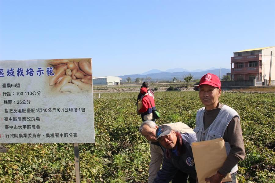 甘藷栽培示範田成果觀摩會,吸引許多農民參加,就栽培技術及契作方式進行熱烈討論。(陳淑娥攝)