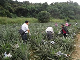 春遊農村高雄龍目社區 鳳梨猴猴玩