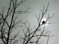 早鳥還是夜貓? 研究:命中注定