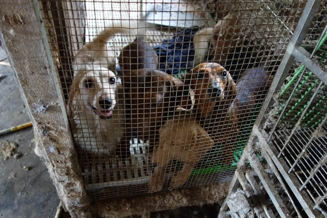 為強化犬貓源頭管理,農委會研擬修法,今年5月起,業者販賣小貓小狗都必須有「身分證」,也就是必須植晶片、上網登記。(台灣動物社會研究會提供)