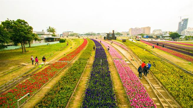 鐵道園區裡的年節花海,美不勝收,走香兼賞花。(李義攝)
