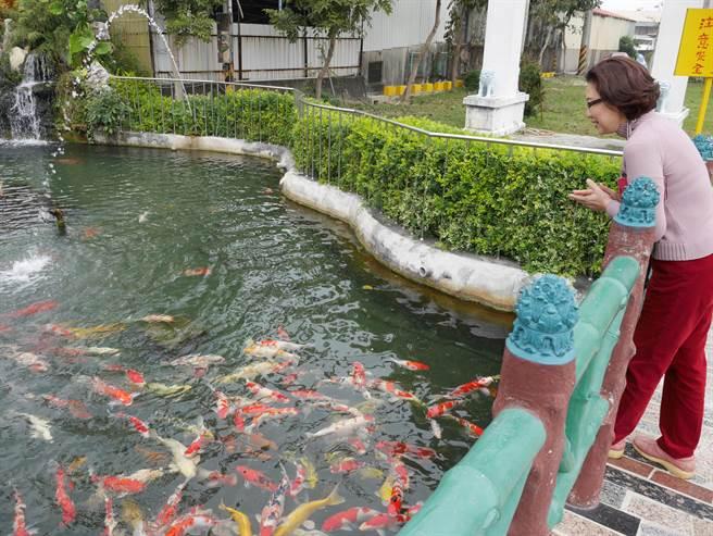 寺廟周邊環境整潔,還養了400多條錦鯉。(郭韋綺攝)