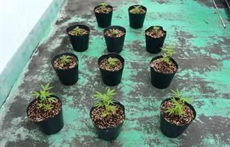 老外綠手指 一顆種子種出小型大麻園