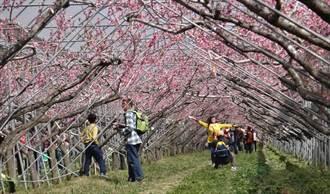 2016年梅峰「春之饗宴」即將登場