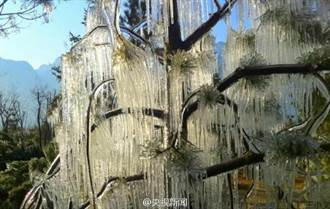 陝西華山冰掛美景 樹枝凍到晶瑩剔透