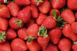 益心助消化!原來草莓營養價值這麼高?