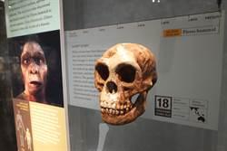 「哈比人」不是人 學者細究頭骨剖析
