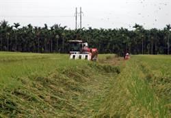 收購稻穀當公糧 前萬丹農會理事長遭訴