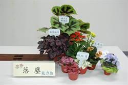 這些淨化植物 比清淨機省錢好用