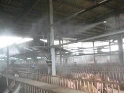 苗栗肉品市場日售400黑豬 註冊「黑真豬」商標
