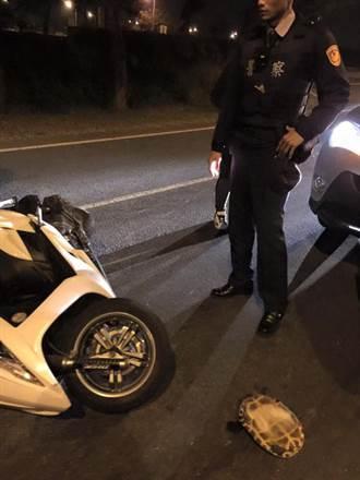 騎歐兜邁撞翻烏龜後倒地 警察來了竟這麼問!