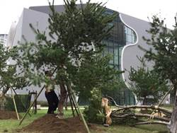 16棵五葉松為台中國家歌劇院添綠意