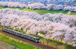 絕美櫻吹雪!日本10+2賞櫻景點懶人包