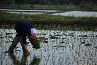 農企業繳稅引反彈 立委盼排除一級農業