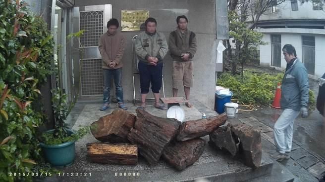 劉姓嫌犯等3人坦承盜採牛樟樹材要準備拿回家培養牛樟芝販售。(黎薇翻攝)