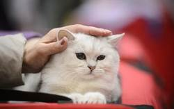 小測驗看你家的貓是左撇子還是右撇子