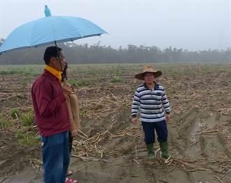 3鄰鄉有颱風災損補助 大林鎮蔗農喊不公