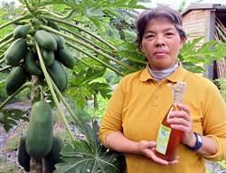 農場主製作木瓜酵素 改善小女兒消化不良
