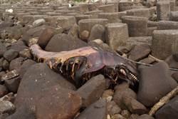 德翔油污岸際 驚見3米偽虎鯨屍