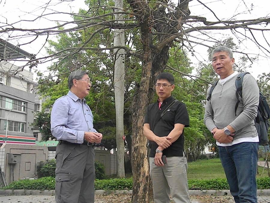 台灣老樹救援協會執行長許叔蓀(左)認為,褐根菌到處都有,只要樹木健康、抵抗力好,就不會染病。(王文吉攝)