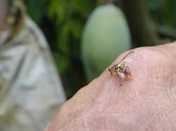 長生藥有望? 英研究發現鋰可延長果蠅壽命