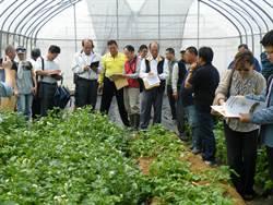 新社區種苗改良場 發表新品種馬鈴薯