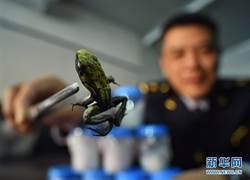 全球毒性最強物種 竟出現在北京快遞郵包