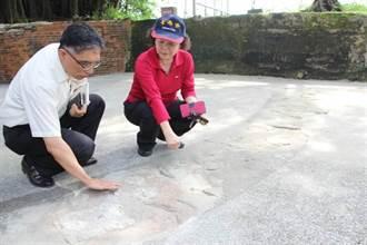 台南市府官員腦袋灌水泥 文化局成蚊化局