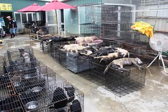 嘉縣家畜所將70犬貓關一車 26隻毛孩活活熱死