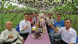 行銷在地觀光 彰化埔心推「葡萄樹下的饗宴」