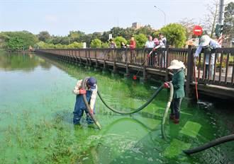 金門太湖綠油油 揪出藍綠藻作怪