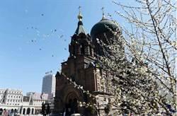 冰城春花綻放聖索菲亞教堂