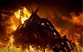 火燒象牙塔 肯亞打擊非法偷獵出狠招