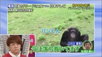 阿蘇動物園重新開放 網傳小龐死訊