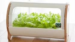 有機蔬菜價格高 日本人乾脆選擇在家自己種