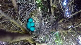 發現一窩小生命! 網友想拍下小鳥誕生過程卻幻滅