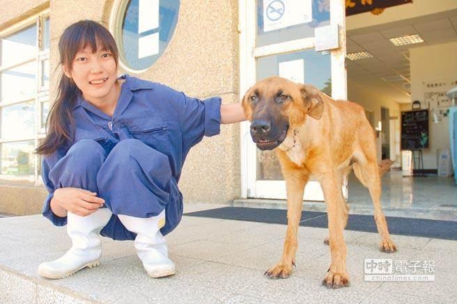 桃園市動物教育保護園區園長簡稚澄,以安樂狗兒的藥劑自殺。(本報資料照片)