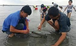彰化漢寶濕地 白蛤大爆發
