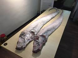 地震魚可以吃!誠食館無菜單料理超讚