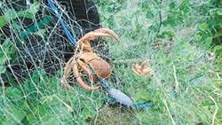 奪命漁網 纏斃綠島寄居蟹