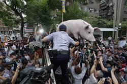豬農陳情激烈抗議 一度翻牆衝進立法院